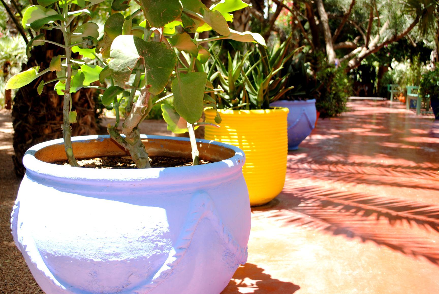 majorelle-gardens-4
