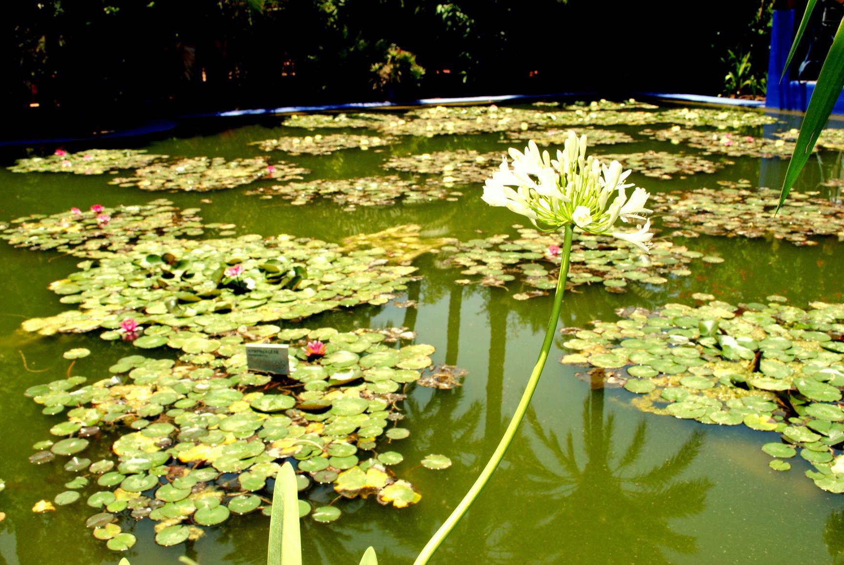 majorelle-gardens-5