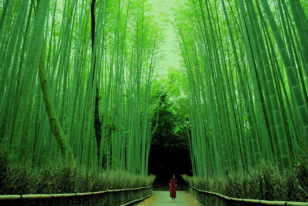 bosque-bambu-arashiyama