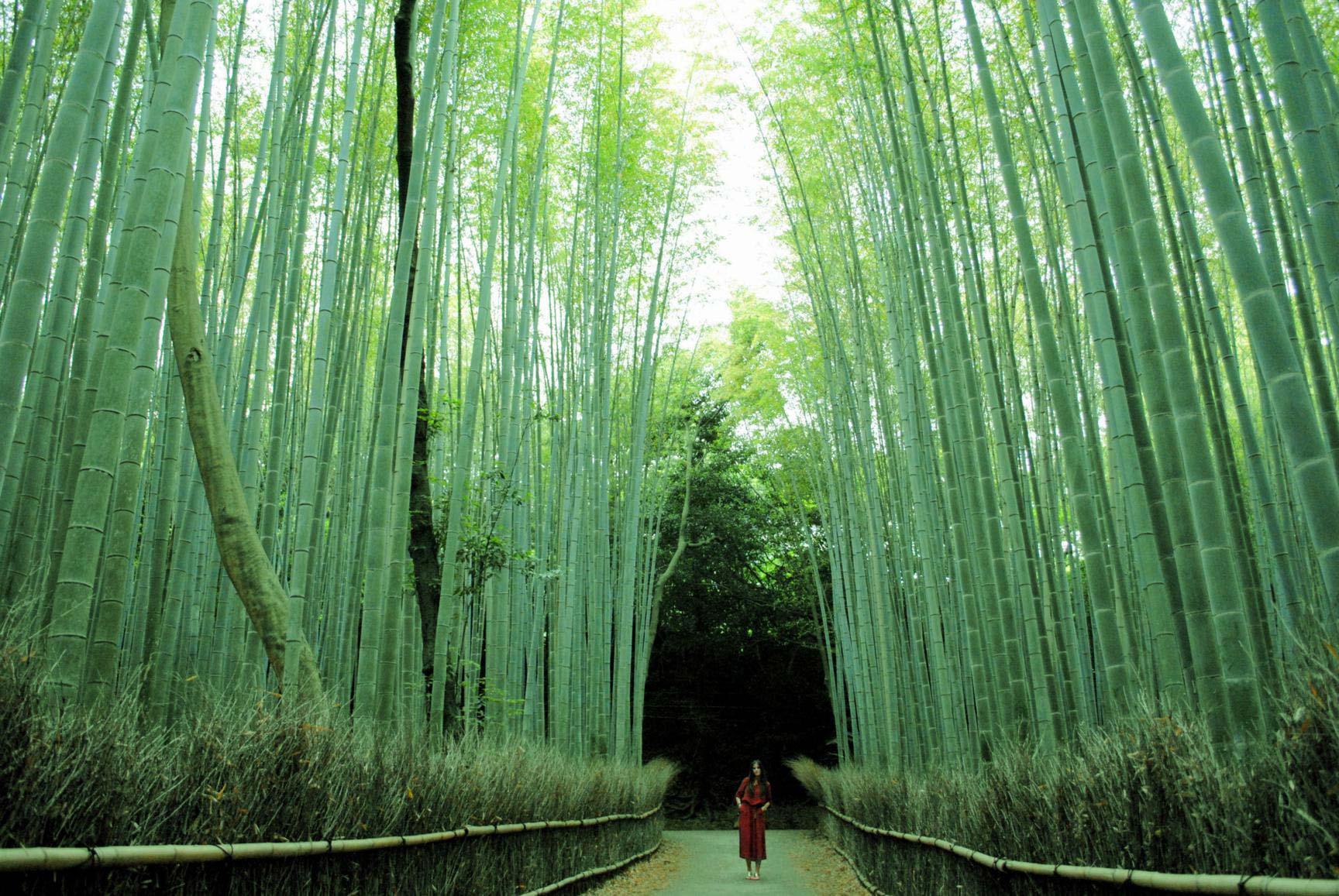 bosque-bambu-arashiyama-11