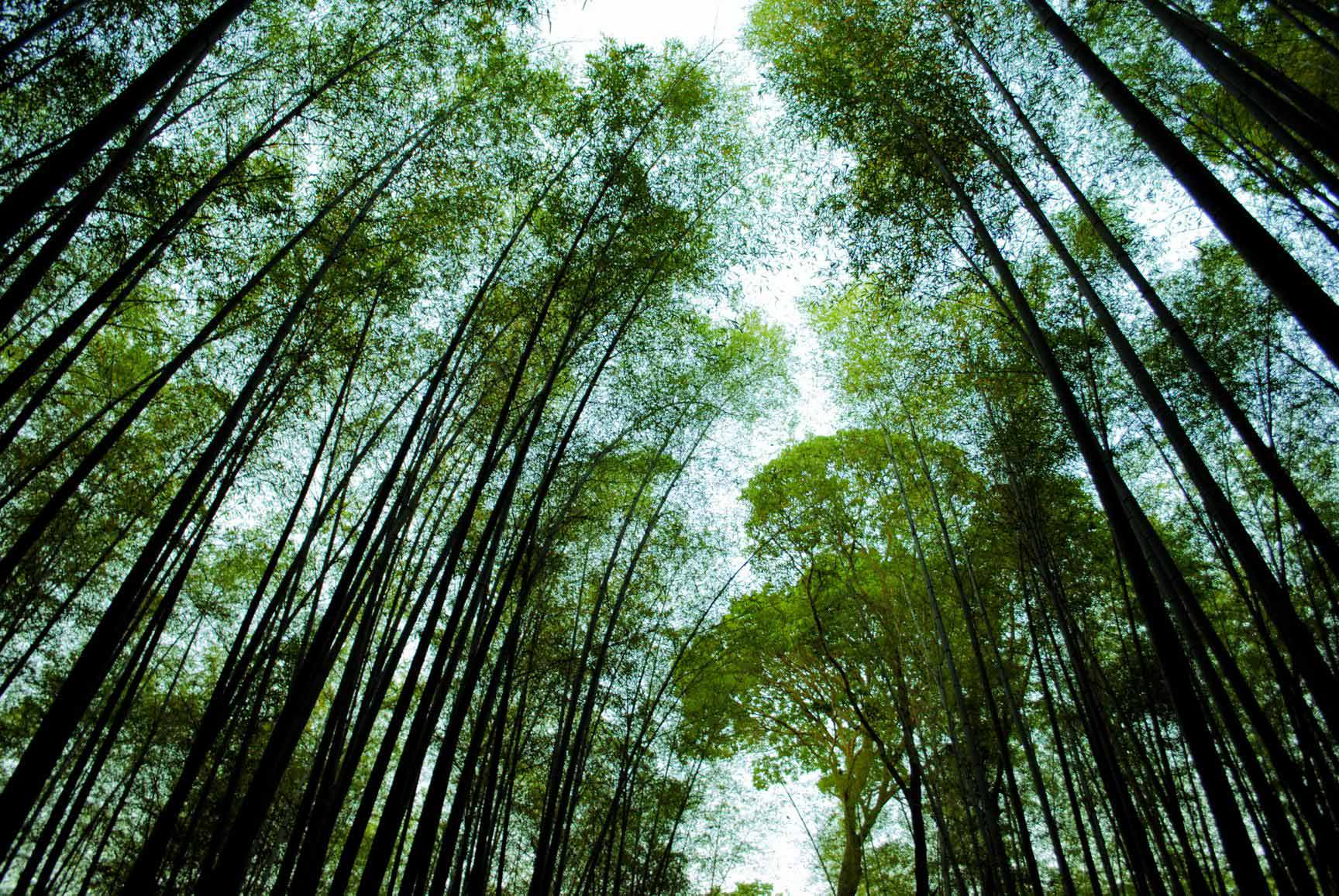 bosque-bambu-arashiyama-12