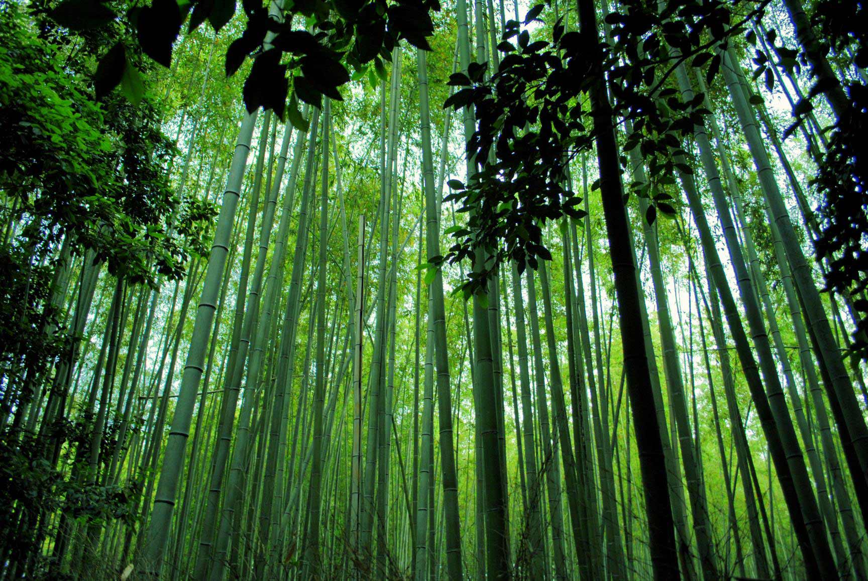 bosque-bambues-arashiyama-1