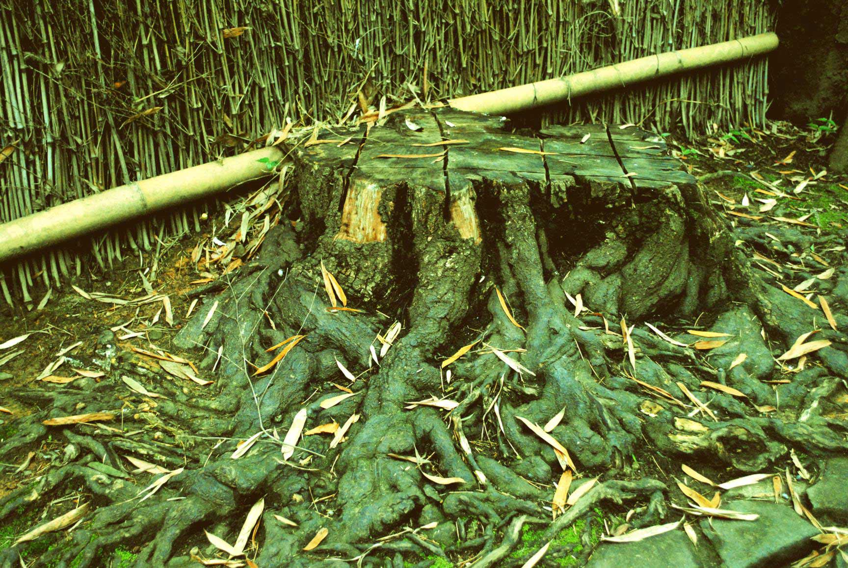 bosque-bambues-arashiyama-2