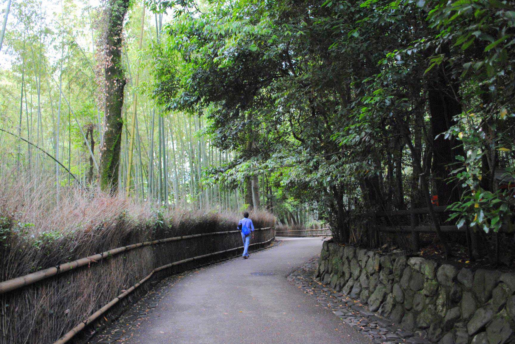 bosque-bambues-arashiyama-3