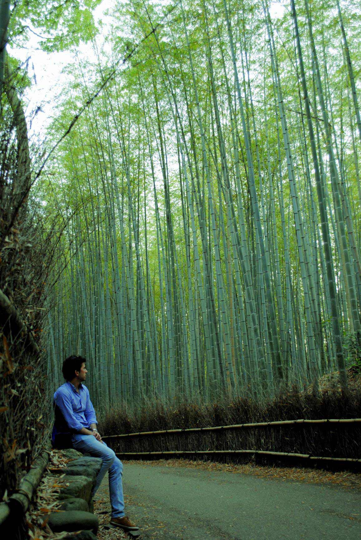 bosque-bambues-arashiyama-8