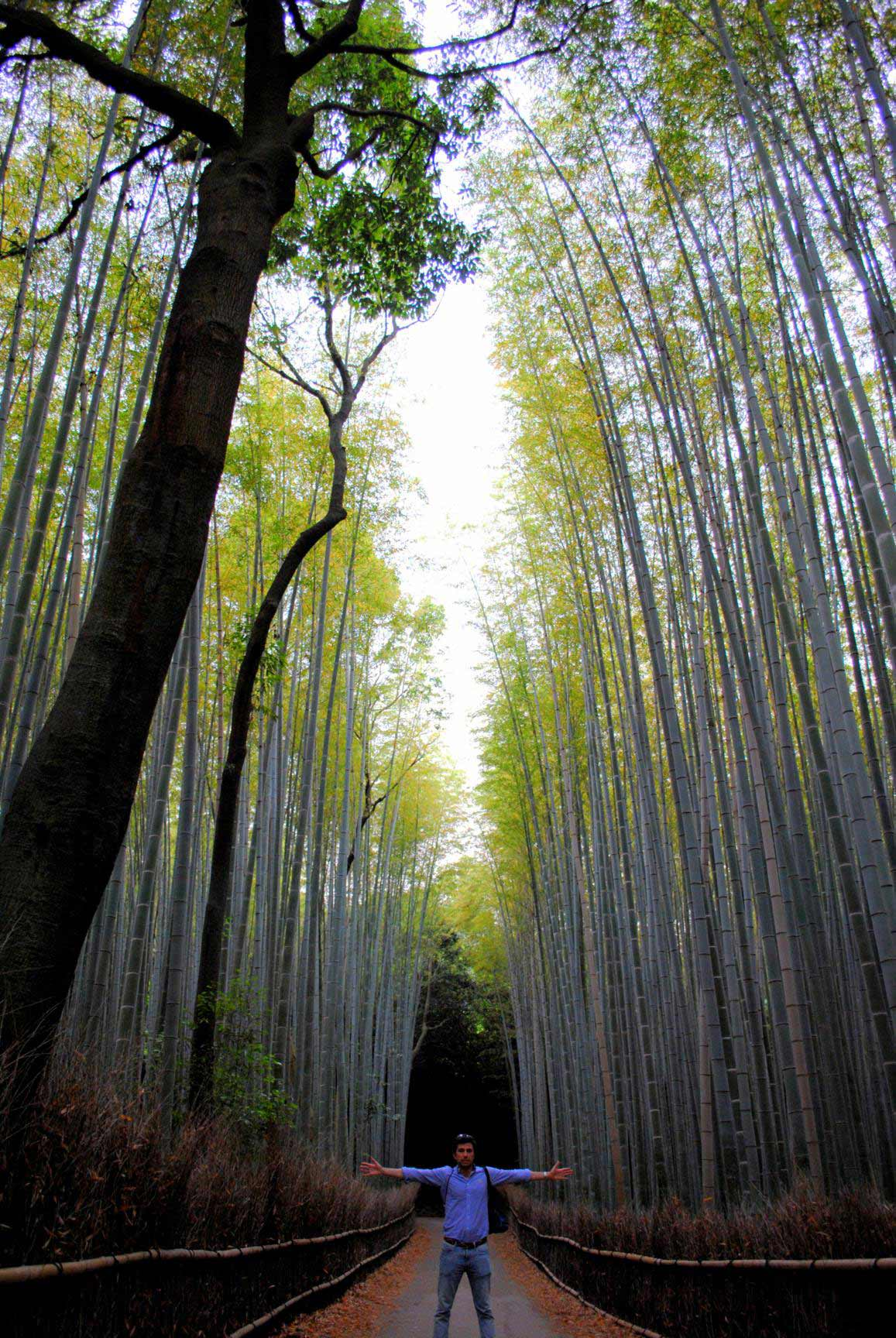 bosque-bambues-arashiyama-9
