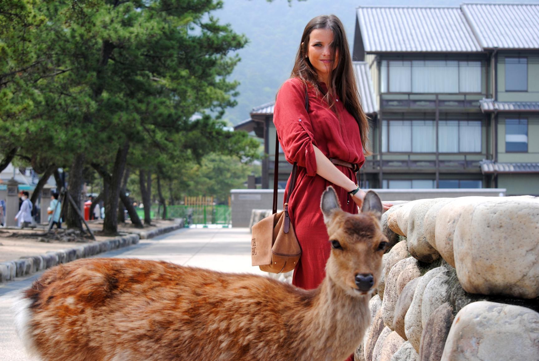 ciervos-miyajima-3