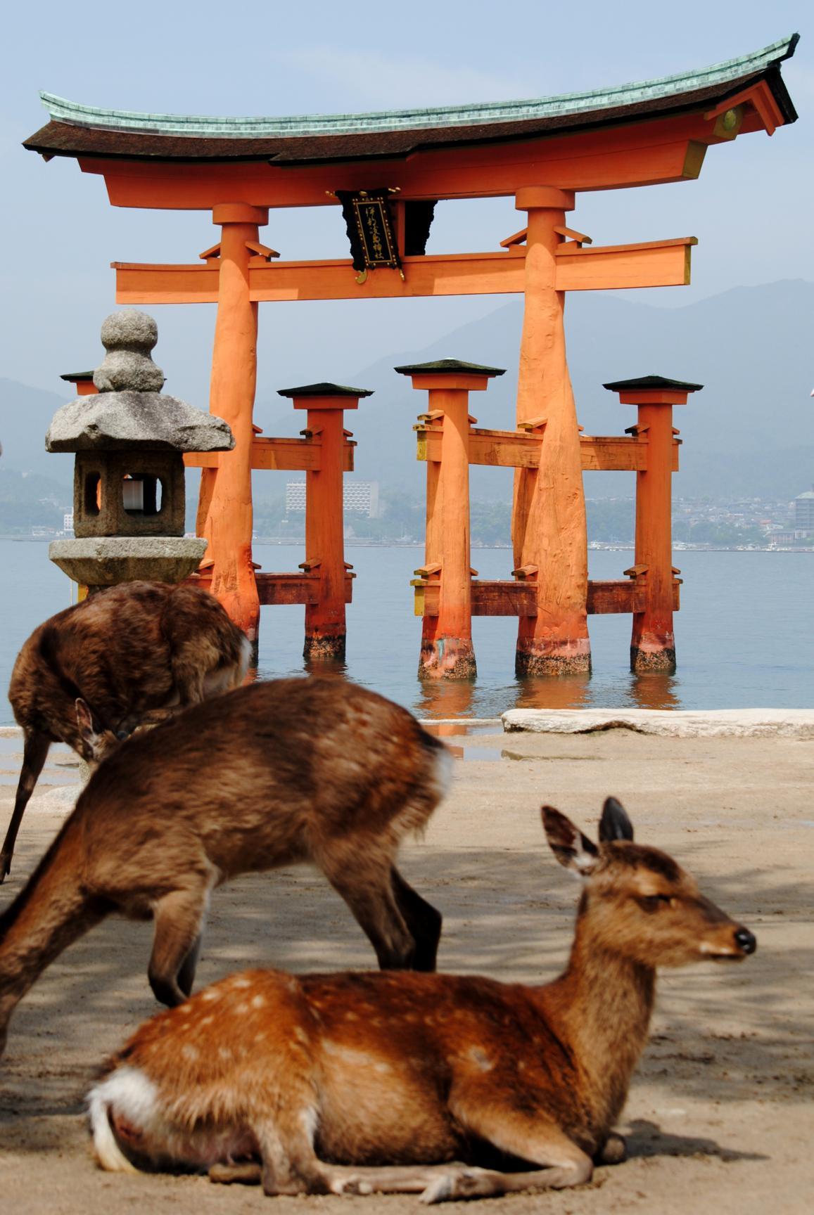 ciervos-miyajima-5