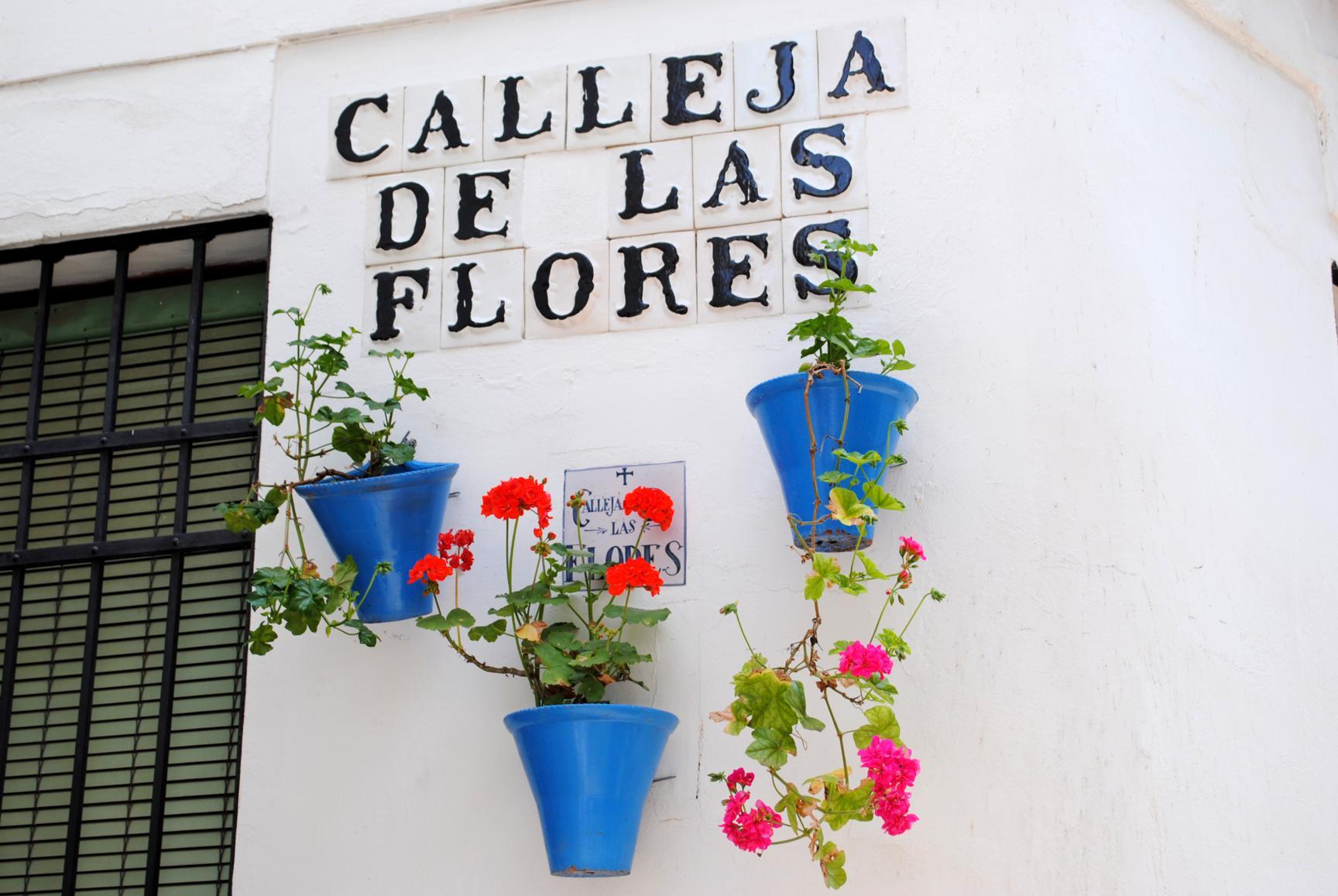 calle-flores-1