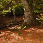 Selva de Irati, un santuario de la naturaleza