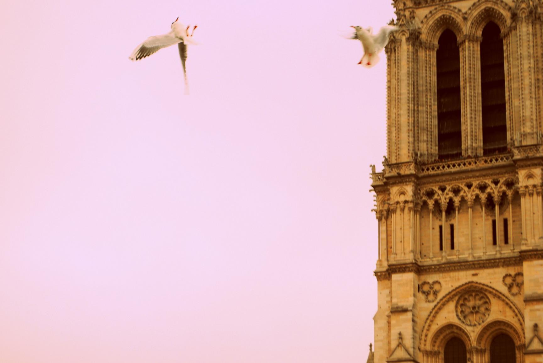 paris-notredame-7