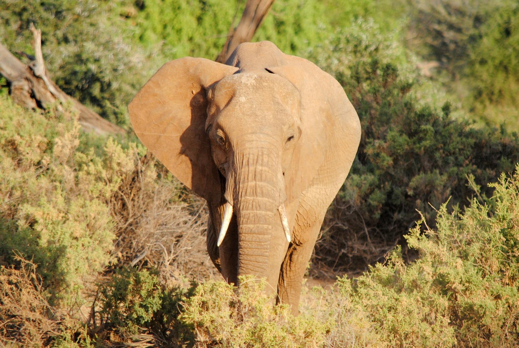 reserva-samburu-guia