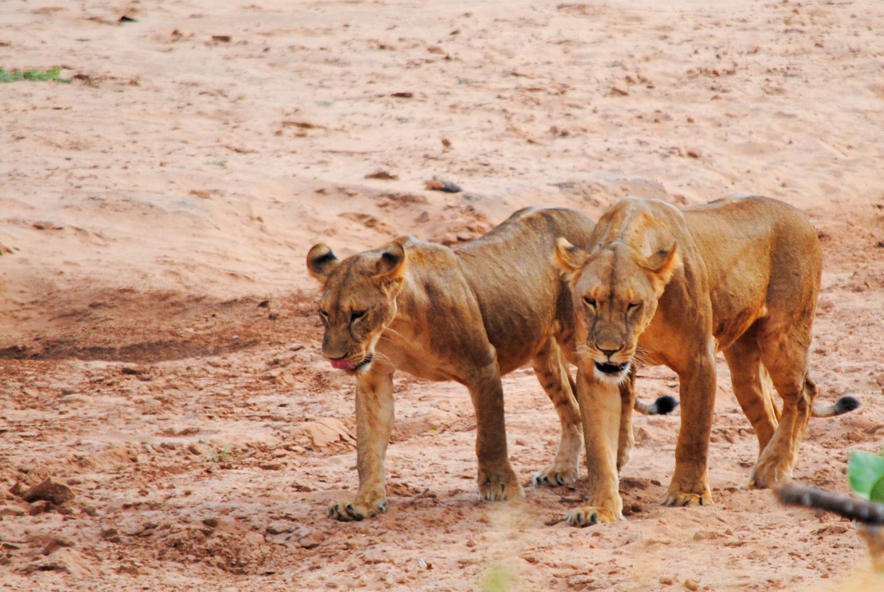 reserva-samburu-que-ver