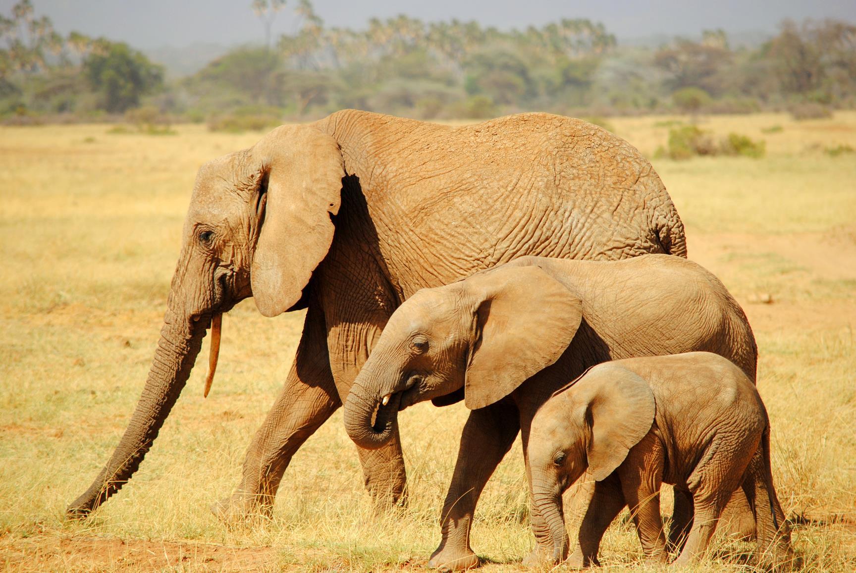 elefante-samburu-kenya