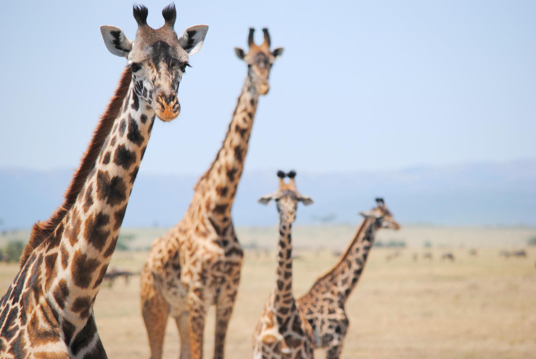 reserva-nacianal-masai-mara