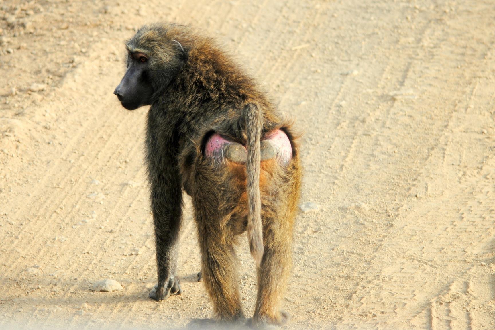nakuru-monos