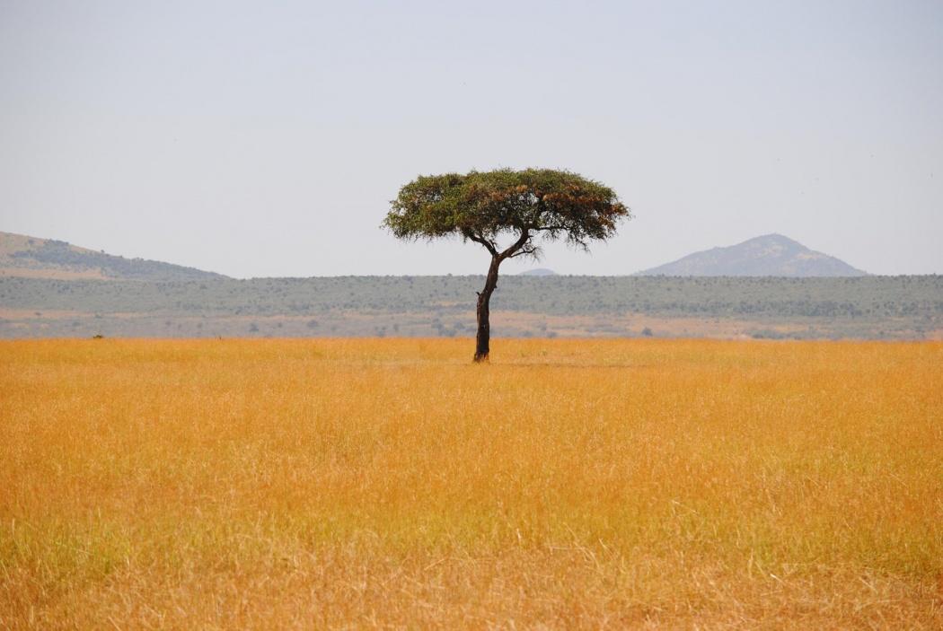 ...porque a veces un segundo, puede cambiar toda una vida. Masai Mara, 2015
