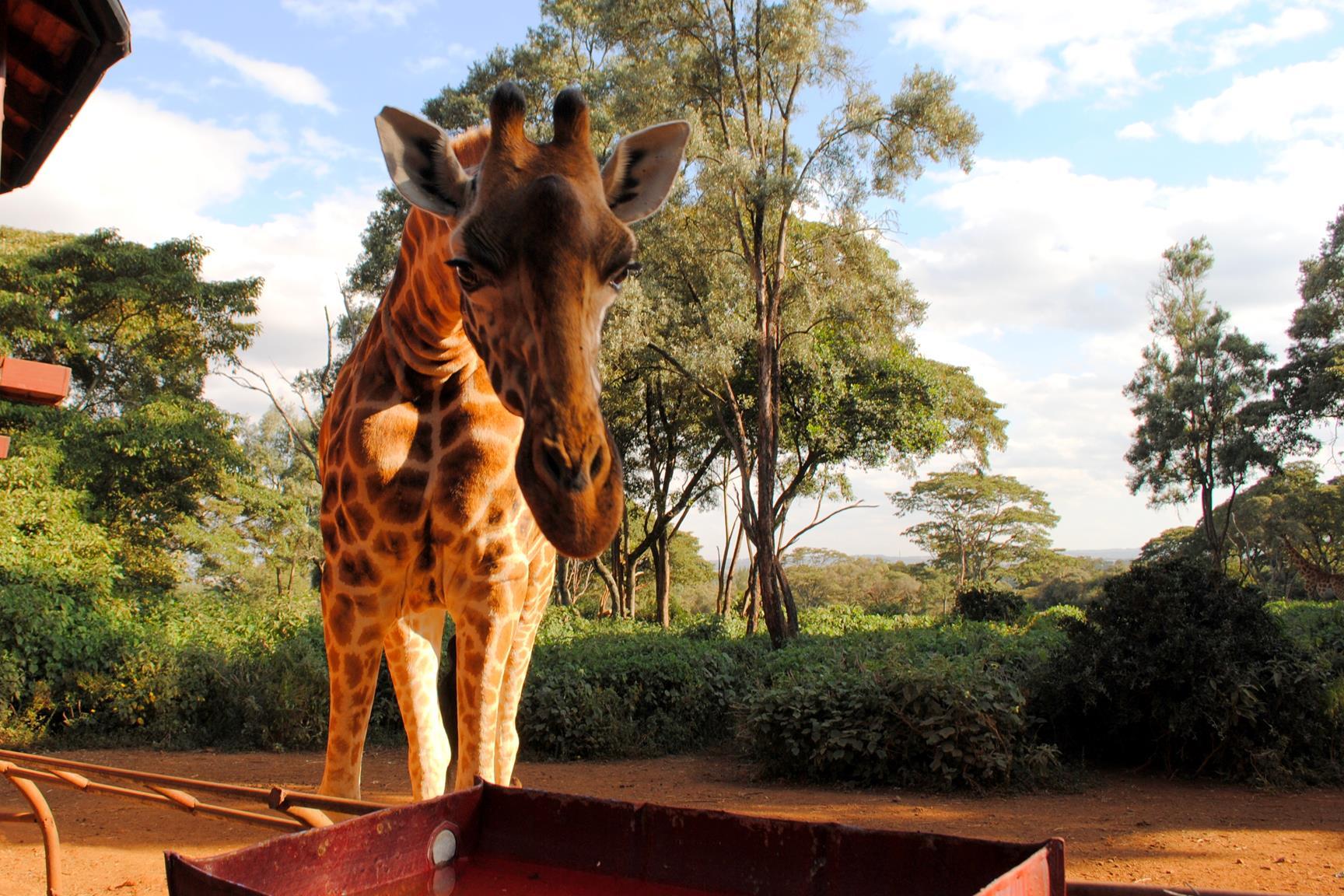 centro-jirafas-nairobi