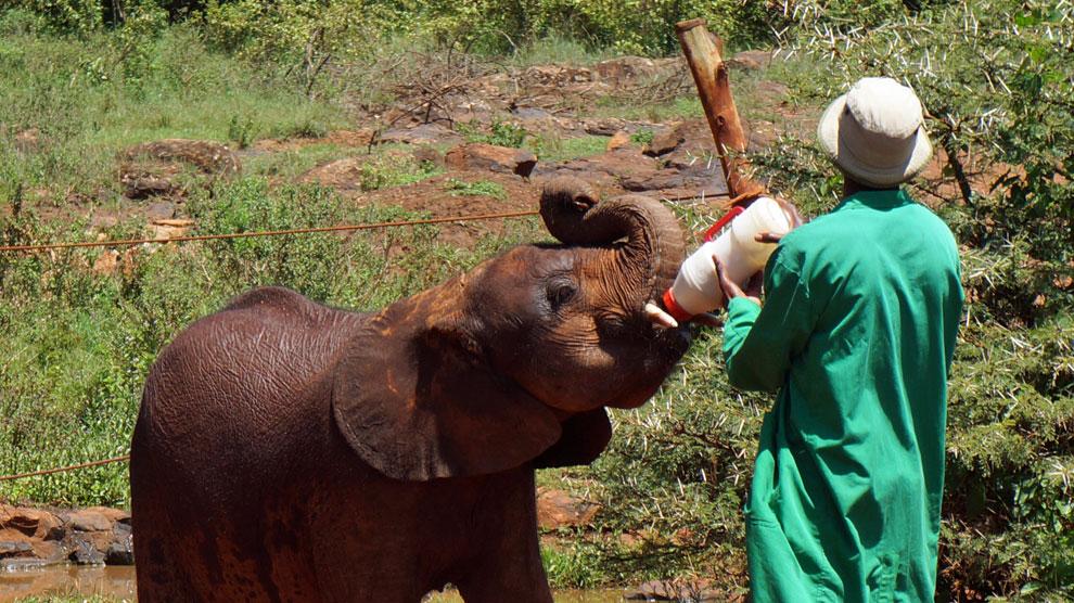 orfanato_elefantes_kenya