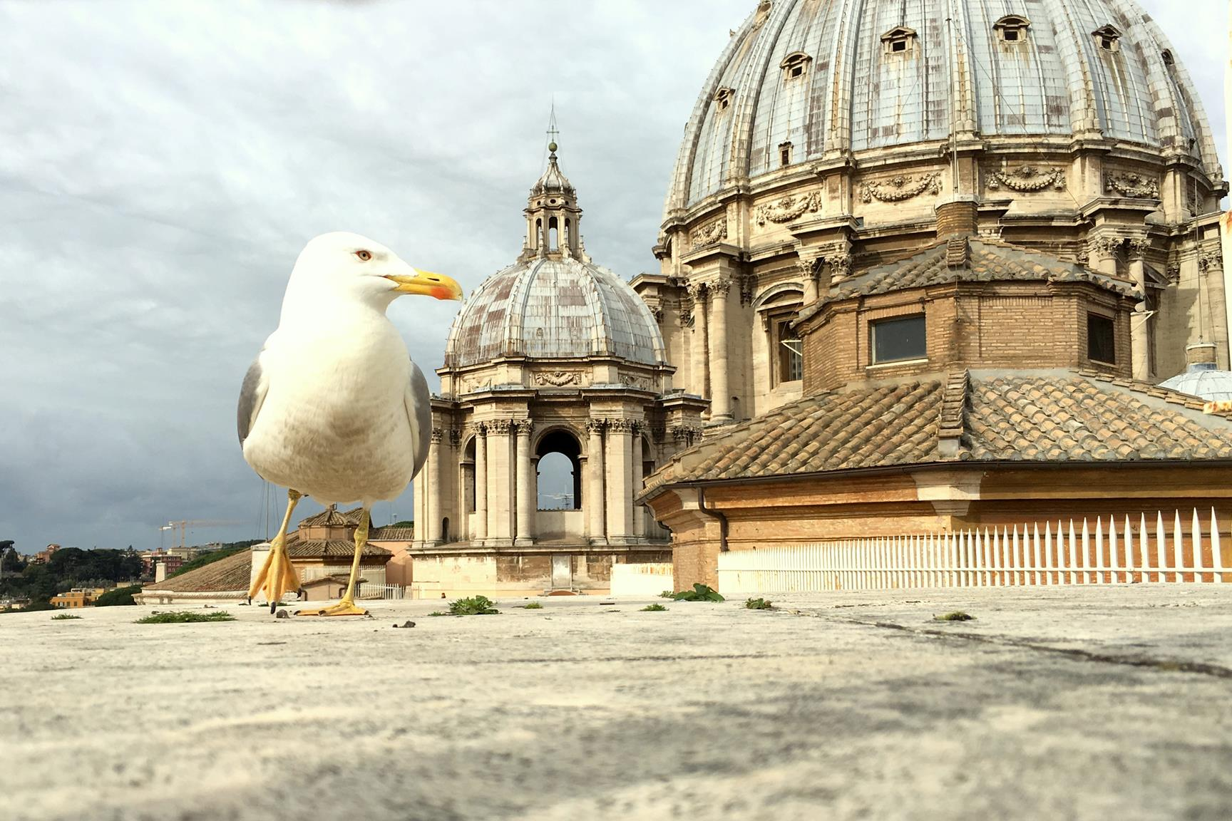 que_ver_roma_basilica_san_pedro_1