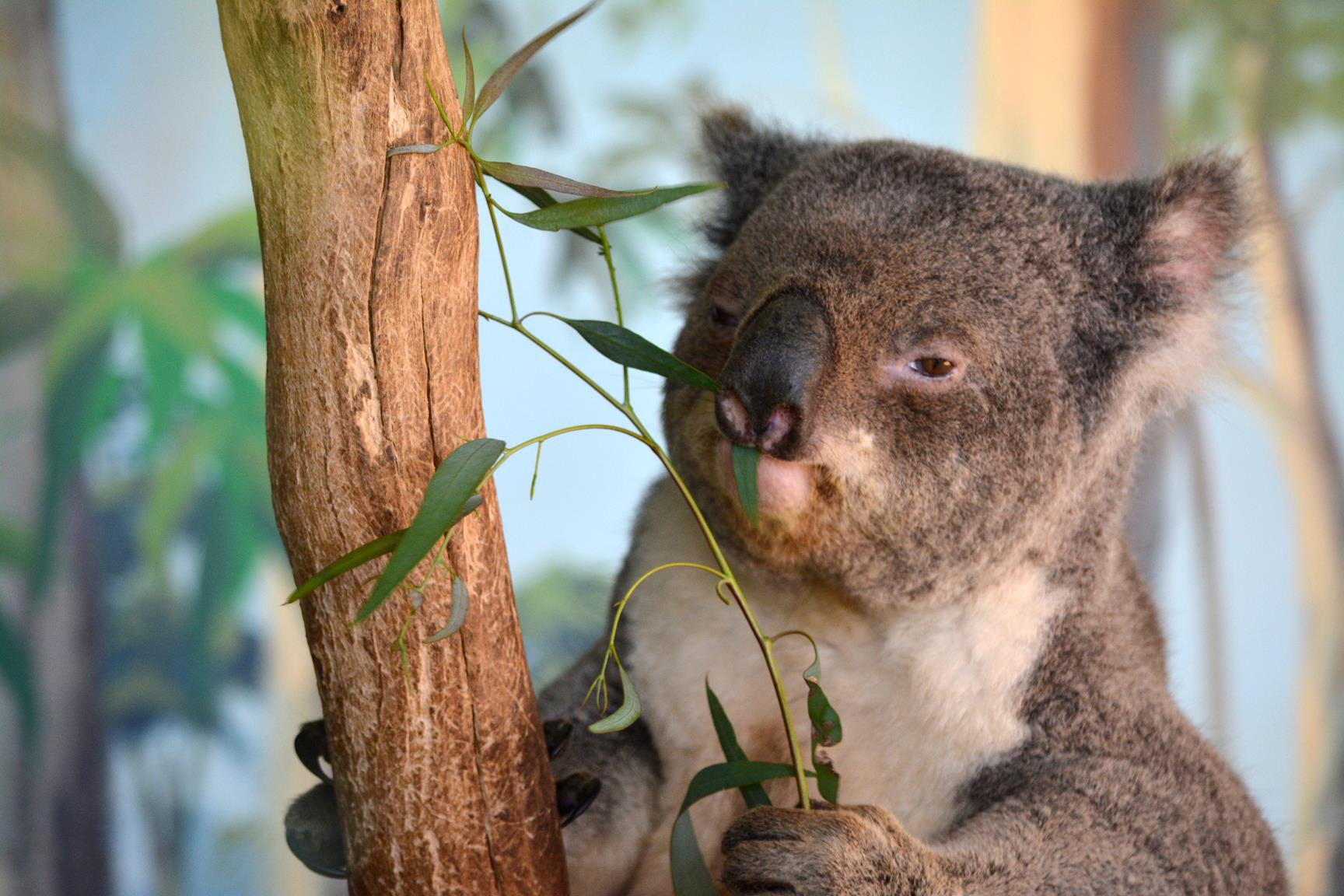 luna de miel australia