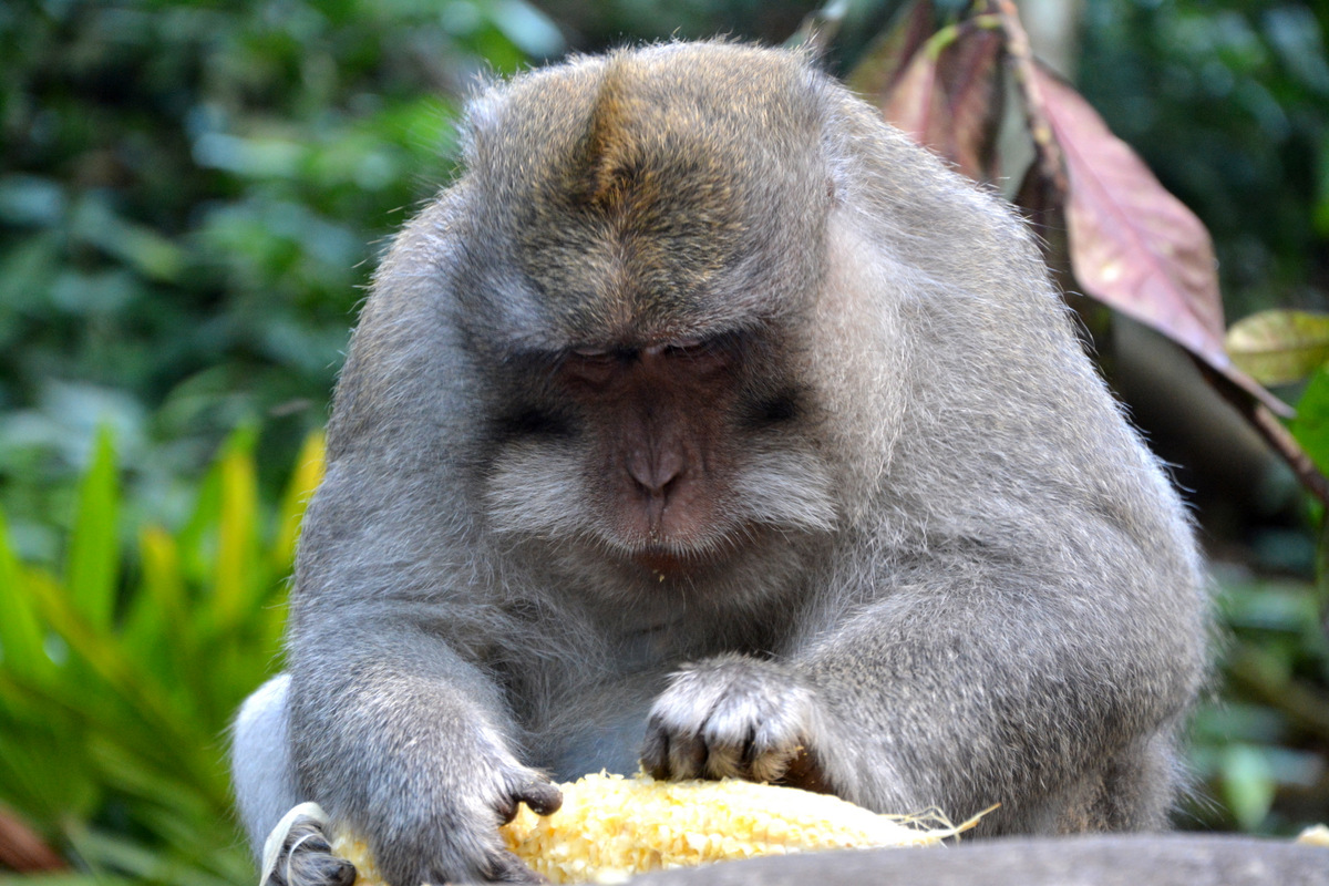que-ver-bali-monkey-forest-1