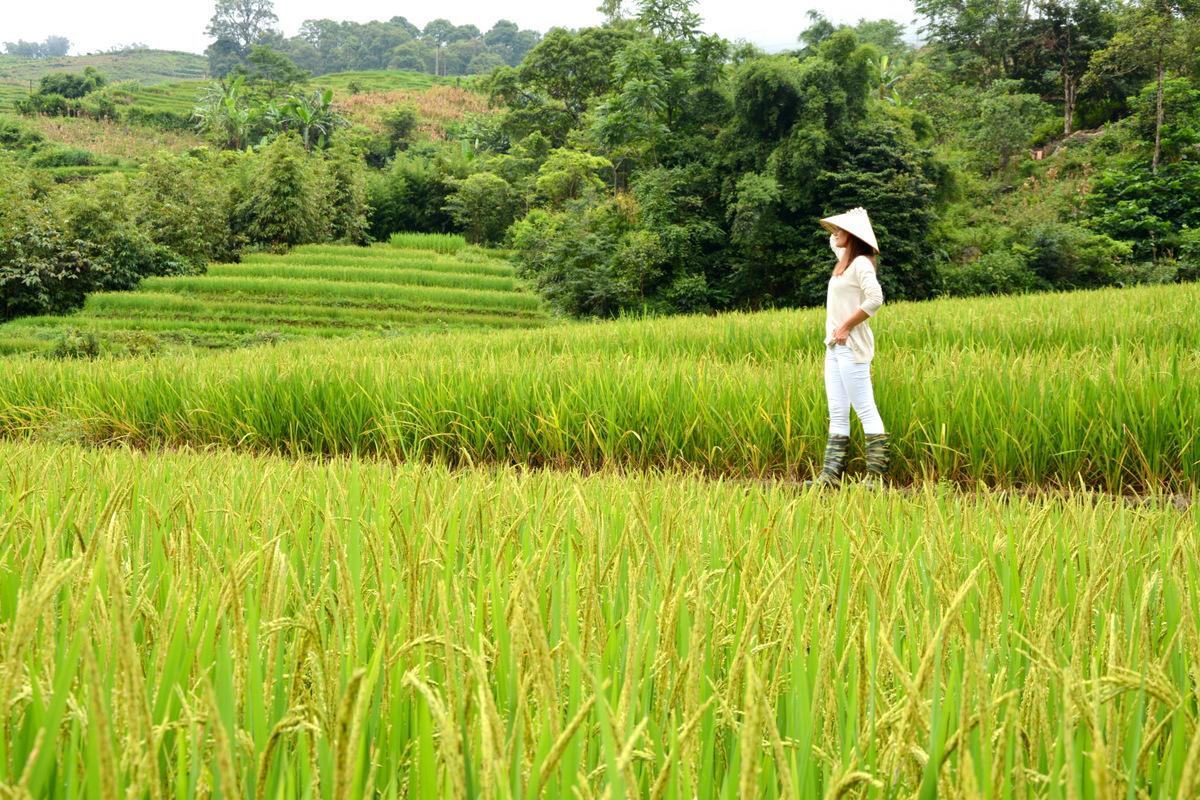 que-ver-vietnam-sapa