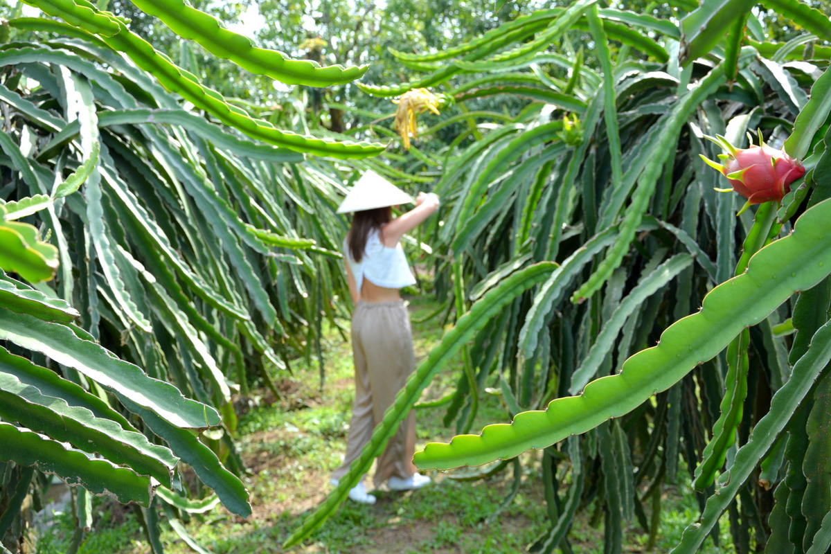mekong-huerto-ba-cong-1