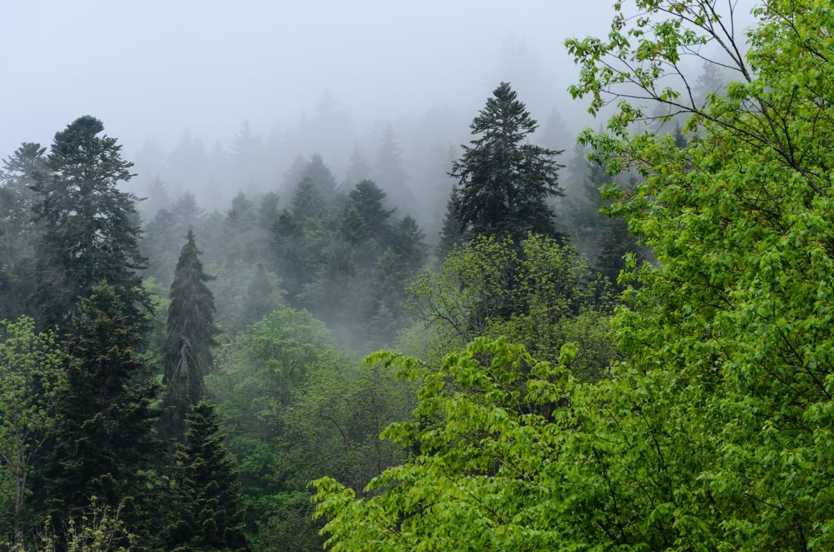 trees_germany